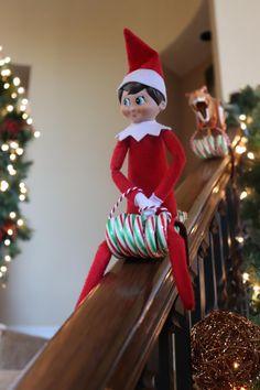Elf Ideas Easy, Awesome Elf On The Shelf Ideas, Elf Is Back Ideas, Elf On Shelf Funny, Shelf Elf, All Things Christmas, Kids Christmas, Merry Christmas, Christmas Humor