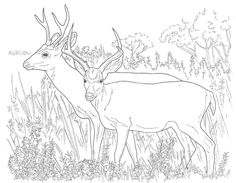 mule deer coloring pages printable deer coloring pages new if youre