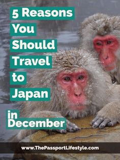 Traveling to Japan in December is a great time to visit Japan. Here are some Japan travel tips for Tokyo, Nagano, and Kyoto. View more budget friendly travel tips and things to do in winter in Japan on www.thepassportlifestyle.com/traveling-to-japan-in-december