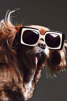 Toast the dog in Karen Walker Sunglasses ad 2015