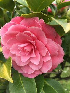 Animated Love Images, Rose, Blossoms, Pink Flowers, Home And Garden, Entertaining, Wallpapers, Beautiful, Ideas