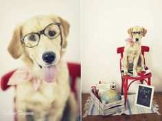 adorable golden retriever in a back to school photo session by Lucy in… Dog Photos, Dog Pictures, Dog Calendar, Calendar Ideas, Puppy School, Puppy House, Kawaii, Colorful Animals, Training Your Puppy