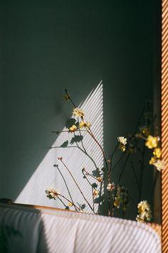flowers. ..  shadow. .. art. ..