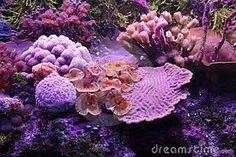 Afbeeldingsresultaat voor koraalrif