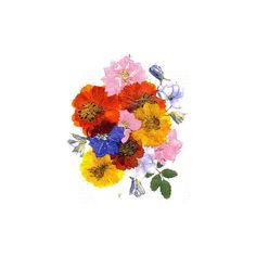 Creativity with Pressed Flowers ❤ liked on Polyvore featuring home, home decor, floral decor, flowers, fillers, plants, fillers - rainbow, backgrounds, flower home decor and flower stem