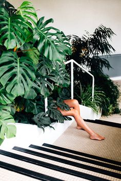 legs and philodendron