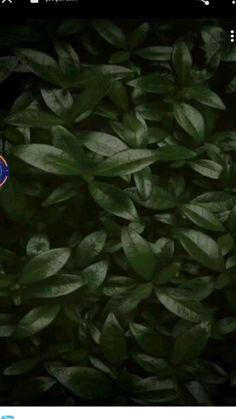 Snapseed, Spinach, Vegetables, Plants, Shankar Mahadevan, Vegetable Recipes, Plant, Veggies, Planets