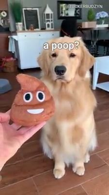 Animal jokes photos - animal jokes for teenagers, humorous animal jokes, animal jokes hilarious, zoo animal j. Cute Baby Dogs, Super Cute Puppies, Cute Funny Dogs, Cute Dogs And Puppies, Cute Funny Animals, Cute Cats, Doggies, Funny Animal Jokes, Funny Animal Pictures