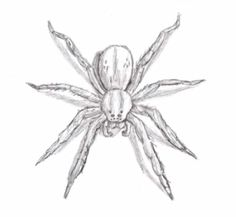 Pencil Drawing Patterns How to learn to draw a spider a simple pencil step by step 7 3d Pencil Drawings, Scary Drawings, Pencil Drawing Tutorials, Animal Drawings, Drawing Sketches, Creature Drawings, Spider Web Drawing, Bugs Drawing, Spider Art