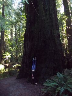 Redwood Forest handstands. Happy Birthday to me! Avenue of the Giants