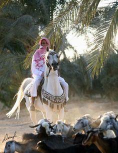 Arabhorse.com - Al Naif Stud - Arabian Horse