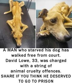 People are seriously so fucked up. Why would you EVER do this to a dog? EVER? Plz help find a way to send this person to jail.!