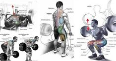 Gain Muscle Mass Fast – 5 Killer Exercises Article for each exercise coming soon….. If you are fed up with having very little muscle mass then you have probably considered joining a gym or purchasing some weight training equipment. But what do you do once you have made the financial commitment to reaching your goals …
