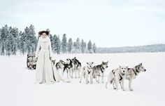 Bride with dog sled