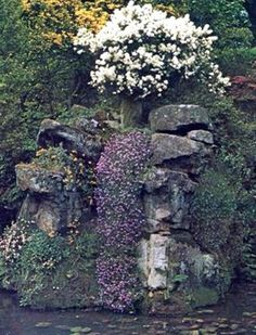 Starting a rock garden- instructions and tips