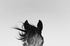 | PAMPA | Tracing maps / Handwoven Rugs & Photography Prints from Argentina - PAMPA HORSES