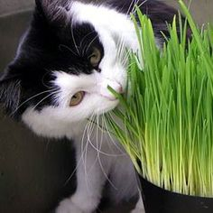 Easy Pet DIY: Grow Your Own Catnip, Pet Grass, Kitty Garden & More