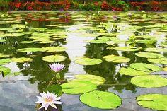 Blossom Lotus Flower In Pond Lotus Flowers, Lily Pond, Felt Art, Water Lilies, Ponds, Drawings, Artwork, Handmade, Color