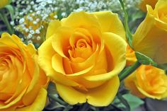 Yellow roses make me smile.