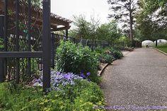 Tyler Rose Garden Walkway