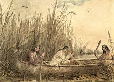 Did you know Wild Rice is a Aboriginal and Native American Invention? Cultivated for thousands of years, this cereal grain was presented to Westerners and as sign of friendship during their first encounters. #NativeFacts | Chippewa Women Gathering Wild Rice, Seth Eastman, c.1857