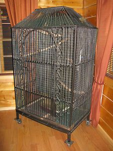 Iron Bird Cages - Ideas on Foter Small Birds, Pet Birds, Macaw Cage, Cages For Sale, Antique Bird Cages, Vintage Wire Baskets, Rose Decor, Backyard Birds, Beautiful Birds