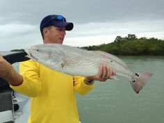 Redfish, 4-18-14, Sanibel, Captiva & Fort Myers Fishing Reports & Charters.