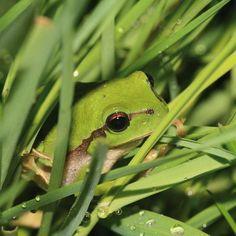 http://www.bourgogne-nature.fr/fr/