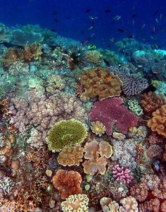 New biodiversity census: 8.74 million species on earth. Eighty-six percent of all land-dwelling species and 91 percent in the water have yet to be discovered and cataloged by science, according to an estimate published in PLoS Biology by the Census of Marine Life scientists.
