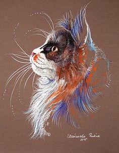 Maine coon by Paulina Stasikowska