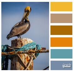 L'oiseau marin
