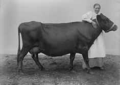 Cow glamour shots: Why Finnish cattle posed for pictures in 1899 Cow Photos, Poses For Pictures, Sweet Cow, Glamour Shots, White Backdrop, World's Fair, Image Photography, Portrait Photographers, Portraits