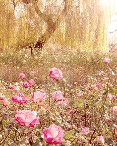 Oh !! Le beau jardin anglais ! #promessedefleurs #fleur #jardin #rose #pink…