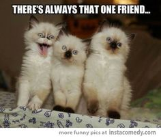 Funny pictures about There's Always That One Friend, tagged with always, friends, funny cats, one posted in Gags Funny Animal Memes, Cat Memes, Funny Animals, Cute Animals, Funny Memes, Animal Funnies, Hilarious Jokes, Funniest Memes, I Love Cats
