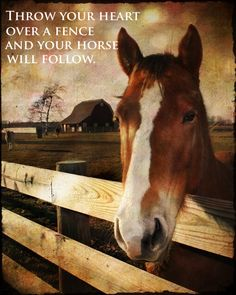 They sure will :) #horse #love
