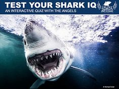 """Participate in an interactive """"Quiz Show"""" online with founder Julie Andersen and learn some amazing facts and maybe even a few well kept secrets about a species we actually know very little about. Shark Activities, Some Amazing Facts, Great White Shark, Whale, Fun Facts, Angel, Sharks, Animals, Instagram"""