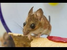 great idea for mousetrap