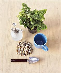 plant-coffee-cup