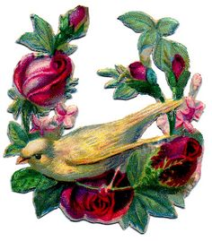 Victorian Bird Scrap - Canary with Rose Wreath - The Graphics Fairy