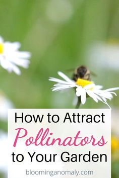 You can attract all kinds of pollinators to your yard, even if you live in an urban area. Learn about the different types of plants to grow to bring in the bees, hummingbirds, butterflies, and other critters into your yard. Click on the link for more information on attracting pollinators to your garden. Garden Types, Types Of Plants, Hummingbirds, Garden Planning, Gardening Tips, Bees, Attraction, Butterflies, Garden Design