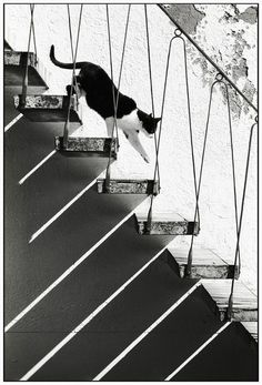 cat on stairs with shadows (cannot find a credit for this, alas. rw)