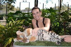 Tiger loving