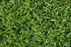 The Grass is Always Greener With These Green Lawn Care Tips!