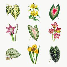 Tropical Plants, Tropical Flowers, Botanical Art, Botanical Illustration, Paper Plants, Free Illustrations, Flower Illustrations, Plant Therapy, Plant Drawing