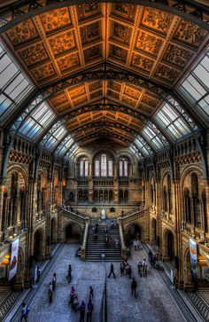 Natural History Museum, London. What an incredible place!