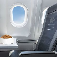 How Not to Fly With Your Dog: Let Him Snap and Growl at the Crew Pet Transport, Transport Companies, Pet Travel, Travel Tips, Travel Hacks, Family Travel, Moving Cross Country, Relocation Services, Airplane Travel