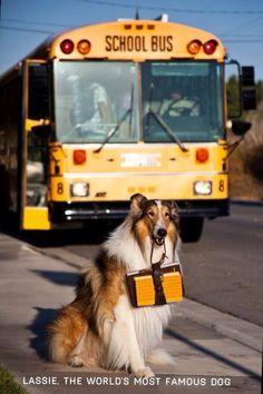 Lassie @ the bus stop