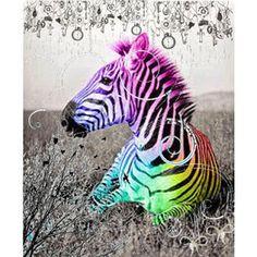 Rainbow zebra pictures |Funny Animal