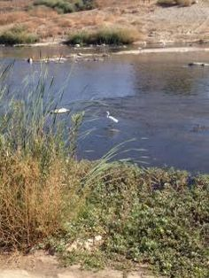 Random picture of a duck in the LA river. This is their habitat and we as humans should respect that and help them restore the land.