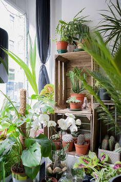 The Little Green Shop – Le Concept Store Végétal Brussels